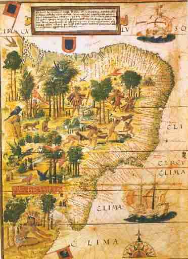 Imagem Plantação Pau-Brasil(1500).